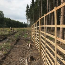 Hier soll ein Laubwald entstehen